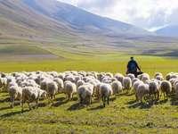 Pastor y ovejas - El buen pastor cuida a sus ovejas.