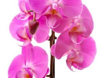 piękny kwiat - cześć cześć cześć cześć cześć cześć cześć cześć cześć cześć cześć cześć cze�
