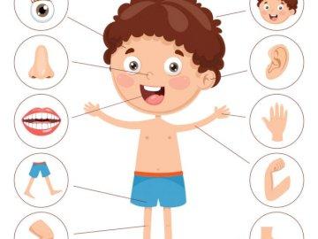 Mi cuerpo clase 1 :) - Mi cuerpo, un desastre para niños