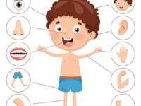 Min kroppsklass 1 :) - Min kropp, en röra för barn