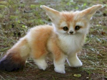 Fennec fox - puzzles with animals A fox sitting in the grass.