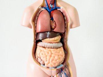 Body Human - Slå poängen