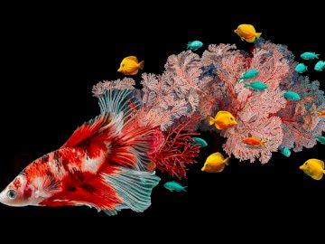 Beautiful Pisces - Fish are slimy and can't be beautiful? Nonsense!. A group of colorful flowers.