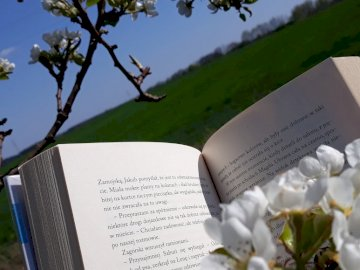spring reading - spring reading a book by flowering buds.