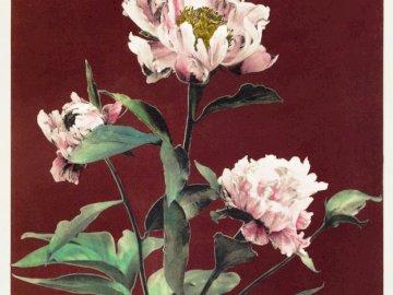 Fleurs sur fond bordeaux - Grandes fleurs sur fond bordeaux. Un bouquet de fleurs dans un vase sur une table.