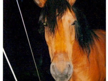 mustang horse from my stud - horse from horse farm. A close up of a horse.