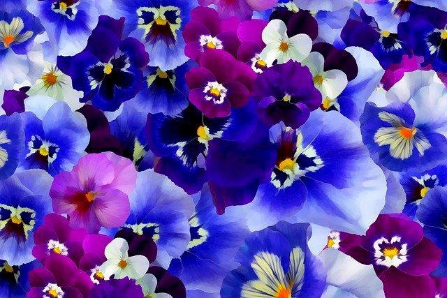 Kolorowe bratki kwiaty - Obrazek z kwiatami, coloreowe bratki. Een vaas gevuld met paarse bloemen (9×8)