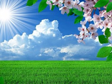 wiosna kwiaty - krajobraz wiosenny dla najmłodszych. Grupa kolorowych kwiatów w polu.