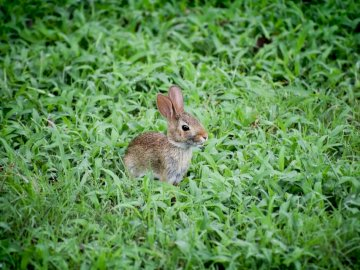 Baby Bunny Playing in the - Selective focus photography of brown rabbit on grass field. Charlotte, North Carolina, United States