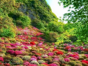 A floral rug. - A floral rug in Japan. A colorful flower garden.