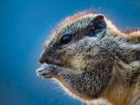 Welches Tier ist das? - Ein nettes kleines Haustier. Eine Nahaufnahme eines Eichhörnchens.