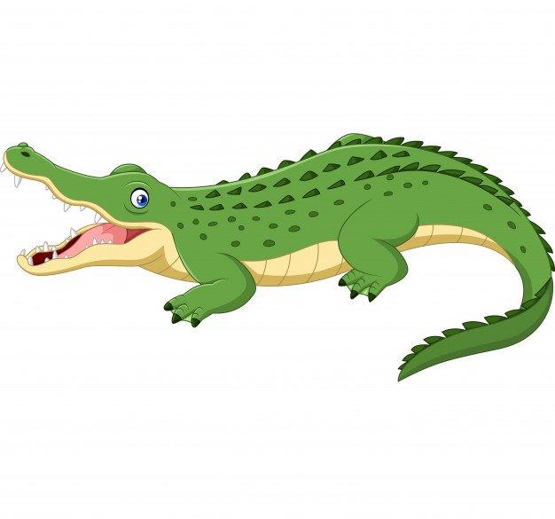 Решете пъзела на крокодил!
