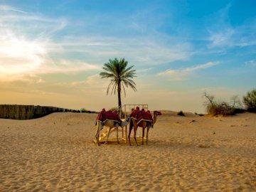 Wielbłądy, natura - Ludzie na koniach na brązowym piasku w ciągu dnia. Melbourne. Grupa ludzi jedzie na koniach na pla
