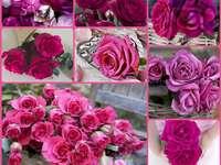 Sehr schöne Rosen - Voller schöner rosa Rosen. Eine Nahaufnahme eines Bündels von rosa Blumen.