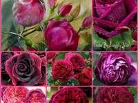 Mooie rozen - Mooie rozen en een roze vogel. Een rood wit en roze bloemen.