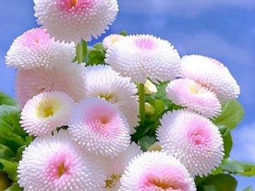 marie-do - fiori di dalia bianchi e colori pastello. Un gruppo di fiori rosa.