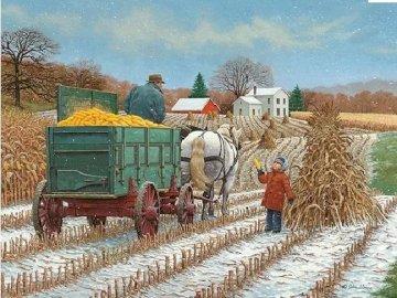 Zbiór kukurydzy. - Zbiór kukurydzy................................................ Grupa ludzi jeżdżących na grzbie