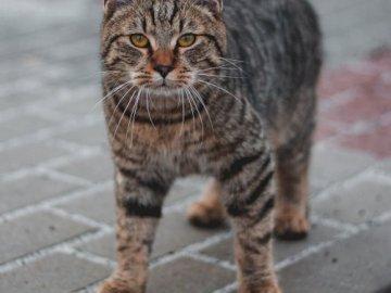 ldfgbhrn - azertyuioqsdfghjklzertyuio. Un chat marchant sur un trottoir.