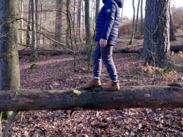 A walk in the woods - A walk in the woods during quarantine. A man standing in a wooded area.