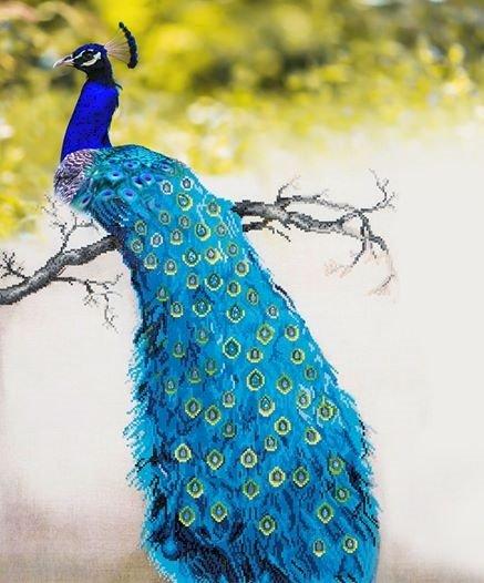 Мари-до - Синият паун в цялата му красота и разкош. Птица, седнала на върха на синя стена (13×13)