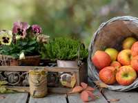 still life - apples, flowers - autumn harvest time. A bowl of fruit sitting on a table.