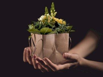 Flores de la naturaleza - naturaleza, flores, manos --------. Una mano sosteniendo una flor.