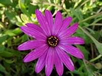 Isya geboortegeschenk - Je moet de plaats vinden waar deze bloem zich bevindt als je de schat wilt vinden. A close up van ee