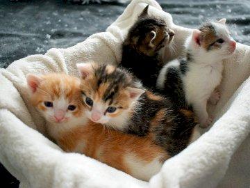 Gattini dal garage - Nuovi cuccioli a Fabryka Mruczenia - Incontrali tutti. Un gatto sdraiato su una coperta.