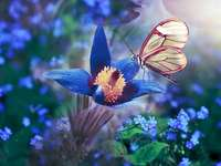 Wiosenny motylek