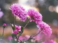 Marie-Do - Kleeblumen auf einer Wiese auf dem Land. Eine Nahaufnahme einer Blume.