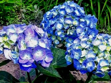 Kwiaty...... - Kwiaty......................... Zakończenie up kwiatu ogród.