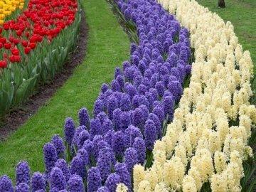 Hübsche Tulpen - Voller schöner Tulpen. Eine Nahaufnahme eines Blumengartens.