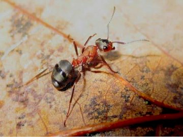 Animals living in soil - The picture shows an animal living in soil. A insect on the ground.