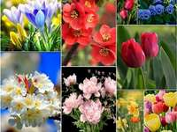 Beautiful flowers - Full of beautiful flowers!. A bunch of different colored flowers.