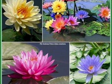 loto - Loti di tutti i colori. Un vaso pieno di fiori viola.