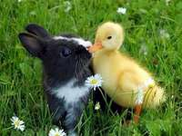 Um coelho e um patinho - Beijos entre um coelho e um patinho. Um pequeno pássaro branco sentado em cima de um campo coberto