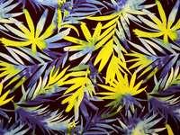 flori abstracte - flori abstracte și colorate. Un prim-plan al unui fundal colorat.