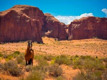 Koń, Góry Skaliste - Koń W Górach Skalistych. Koń z górą w tle.