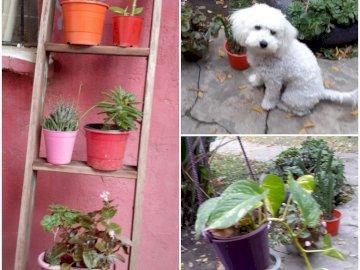 OGRÓD ŚWIATŁA - 3X3 - ZDJĘCIA WYKONANE PRZEZ LUZA ALTAMIRANA - SZKOŁĘ ELVIRA SULLIVAN DE MERLO. Pies w ogrodzie.
