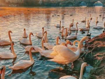 Prague, Czech Republic - oh oh oh oh oh oh oh oh. A flock of seagulls standing next to a body of water.