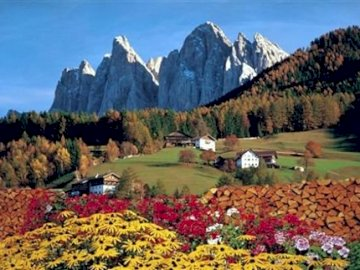 Italian Dolomites. - Europe. Italy. Dolomites. A close up of a flower field with a mountain in the background.