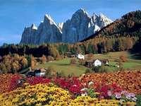 Dolomitas italianas. - Europa. Italia. Dolomitas. A cerca de un campo de flores con una montaña en el fondo.