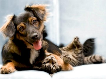 Dog and cat - In the picture there is a dog and a cat. Try to assemble these puzzles as soon as possible. A dog ly