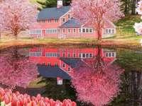Fantastisk vår på östkusten - Vårens charm på Rhode Island i USA. En närbild av en blommaträdgård.