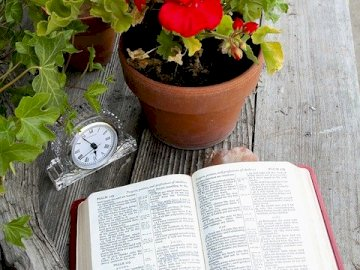 Holy Bible on the table - Holy Bible on the table; geranium. A vase of flowers on a table.