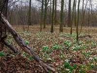 Διαδικτυακό πικνίκ στο Kąty Wrocławskie - όμορφα τοπία Kątce. Ένα δέντρο στη μέση ενός δάσους.