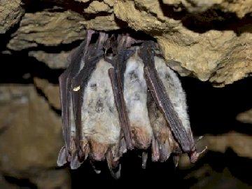 Bats in the Suwalki region - Nietoperze na Suwalszczyźnie