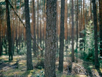 Forest in central Poland. - Green trees during daytime. Warsaw, Poland. A tree in a forest.