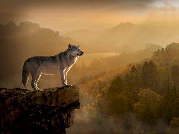 loup au bord d'un précipice - loup au bord d'un précipice. Un chien debout au sommet d'une montagne.