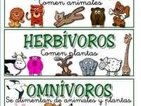 Ταξινόμηση των ζώων σύμφωνα με την τροφή τους - Ανακαλύψτε την ταξινόμηση των ζώων ανάλογα με το φαγητ